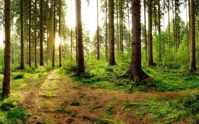 V USA se spojily firmy, neziskovky a státy, společně chtějí do roku 2030 vysadit téměř miliardu stromů